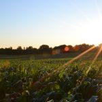 loan against agricultural land खेती की ज़मीन पर लोन